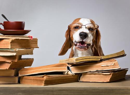 Los animales domésticos en el Código Civil