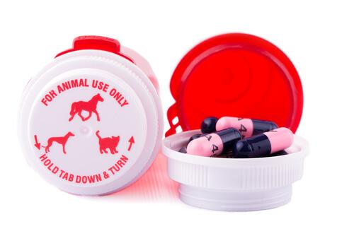 Los mejores antibióticos para perros