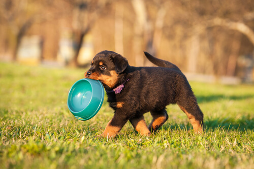 5 nutrientes más importantes para los cachorros