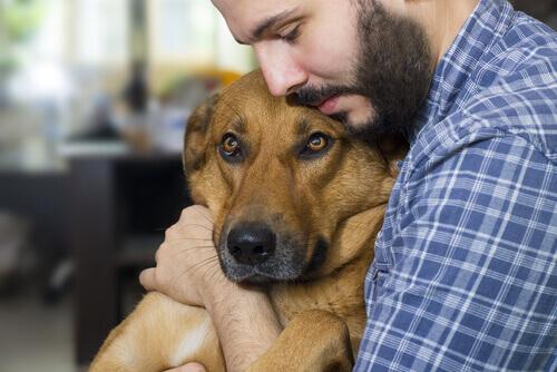 Causas principales del cáncer en perros