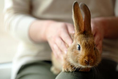 Conejo calmado
