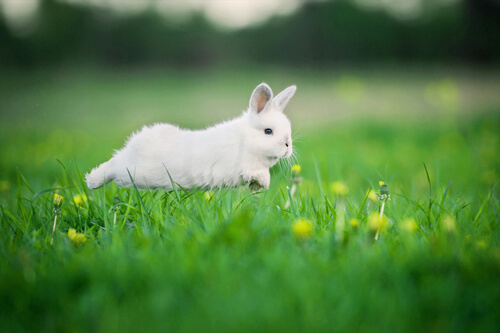 Conejo corriendo