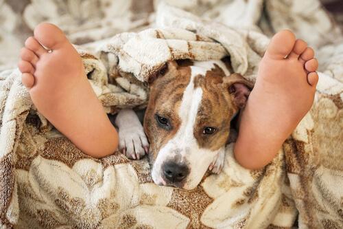 Dormir con su mascota: ¿es seguro?