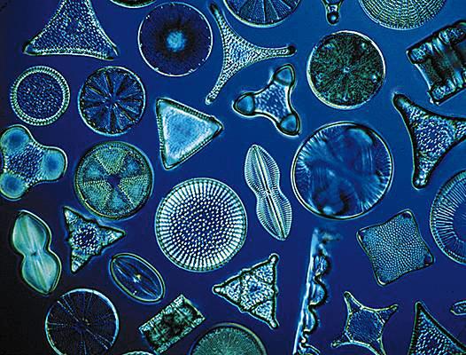 Tierra de diatomeas y perros: ¿cuáles son sus efectos?