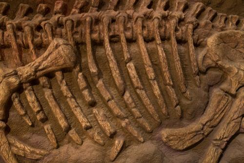Huesos fósiles