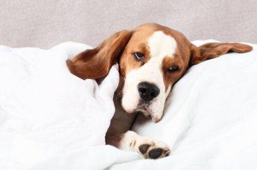 Digestión e indigestión en los perros