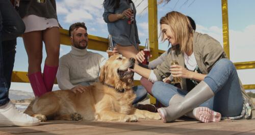 Beneficios de la levadura de cerveza para perros