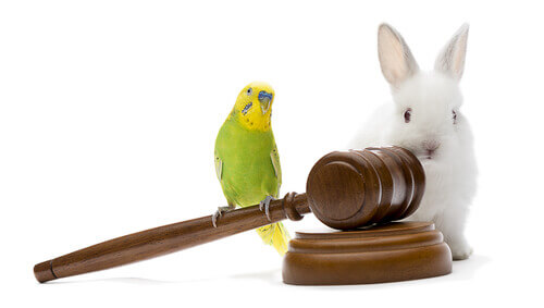 Legalidad de animales exóticos como mascotas