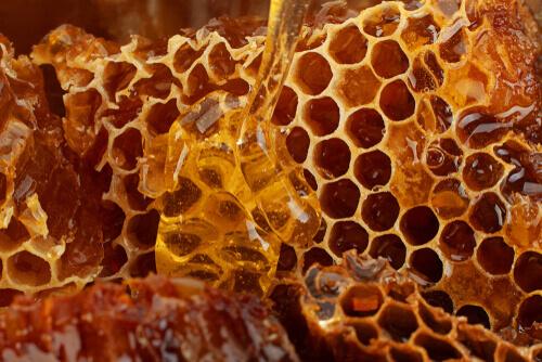 La miel es uno de los productos de la colmena de abejas para perros