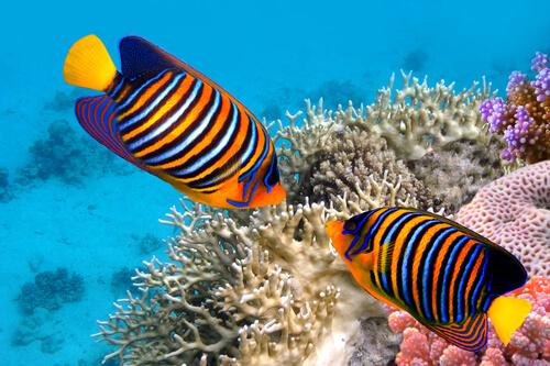 5 curiosidades de los peces de colores