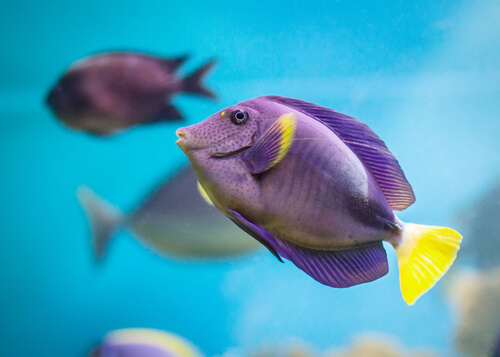 Fish in the purple and yellow sea.