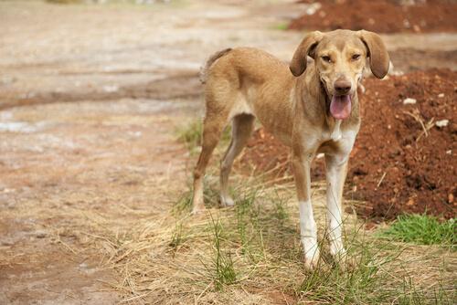 ¿Pérdida de peso en los perros? Enfermedades que puede estar padeciendo