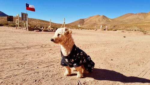 En Chile puede llegar a ser un delito si alguien no cuida de su mascota