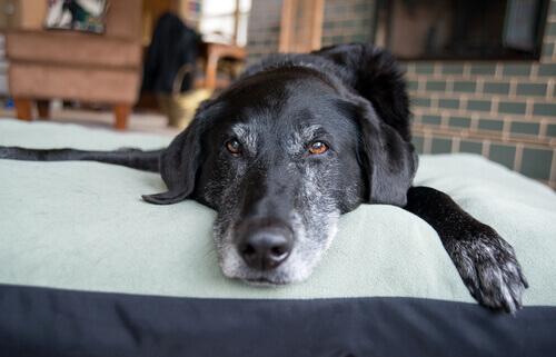 Perro calmado