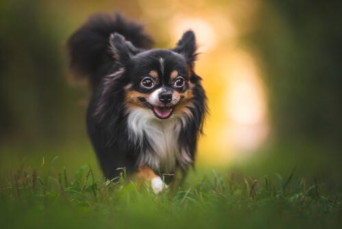 Consejos para proteger a tu perro de las picaduras de insectos