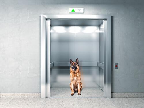 Perro en un elevador