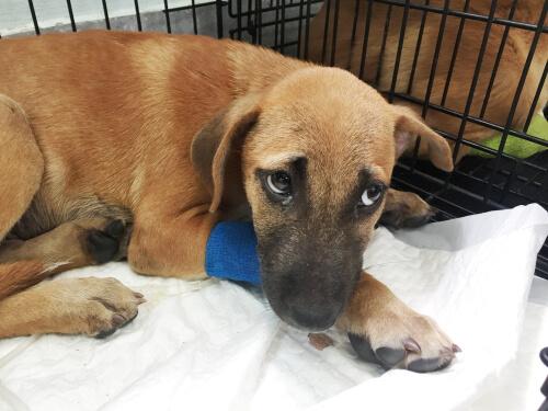 Vómitos con sangre en perros: causas y tratamientos