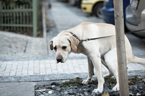 Problemas digestivos en perros: tratamiento y prevención