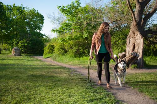 Perro pasea por un carril