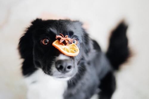 Importancia de los antioxidantes en la comida para perros