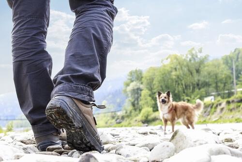 Perro se pasea en presencia de su amo