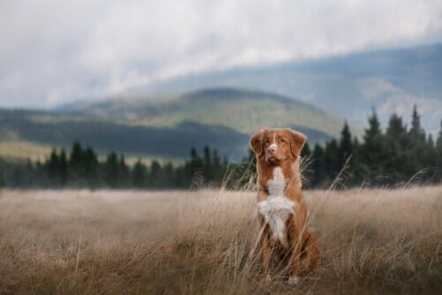 Perro sin correa en el campo