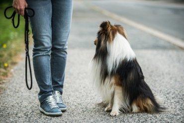 Ciudades y lugares para pasear con el perro suelto