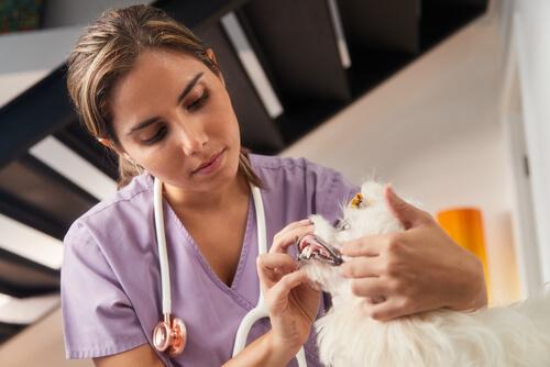 Veterinaria revisando a un perro.