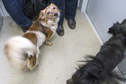 Perros en ascensores