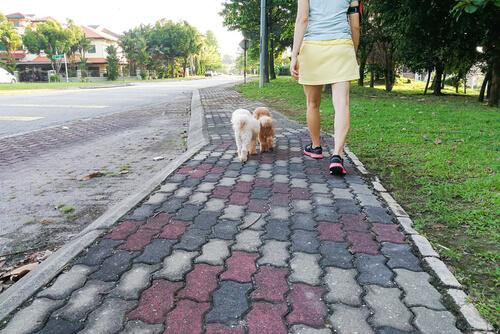 Perros pasean sin correa