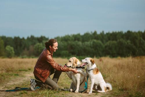 Perros sueltos en el campo