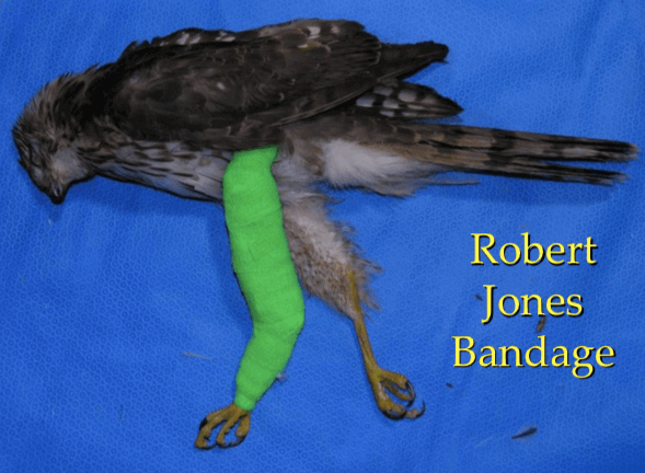 Vendaje Robert Jones en clínica de aves