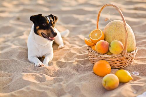 Vitamina C en perros