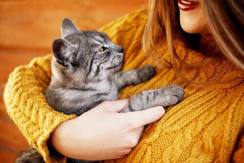 Abrazar a un gato