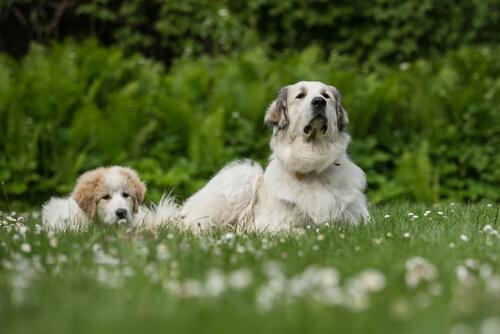 Cachorro con su madre canina