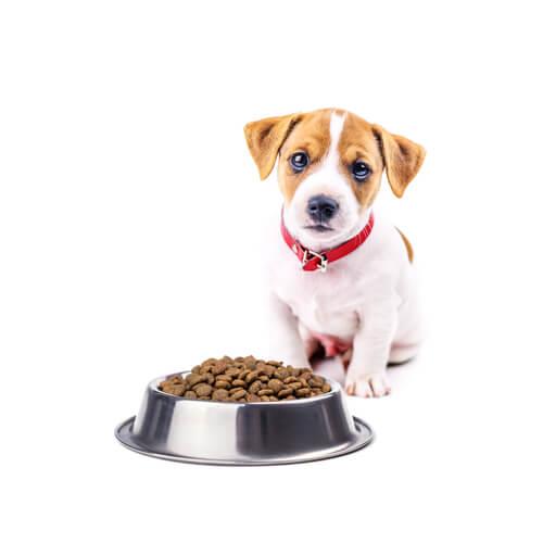 Cachorro con plato de pienso