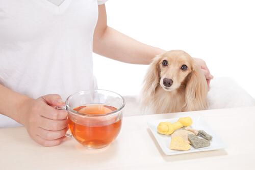 Café para perros