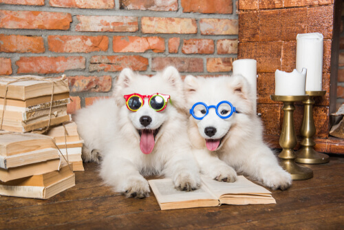 Cannes with glasses represent the smartest dogs