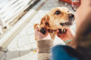 ¿Cómo los perros pueden reconocer los miembros de su familia?