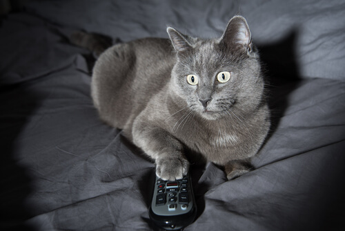 4 razones del comportamiento nocturno de los gatos