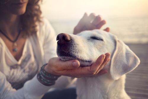 Comportamientos de los perros cuando los acariciamos