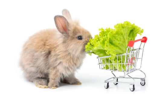 Conejo comiendo lechuga