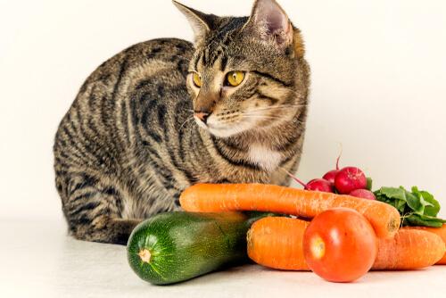 ¿Pueden los gatos comer verduras?