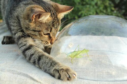 Pienso con insectos para perros y gatos