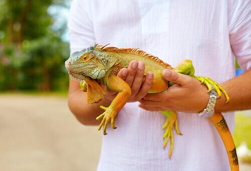 Los 5 parásitos más comunes de las iguanas