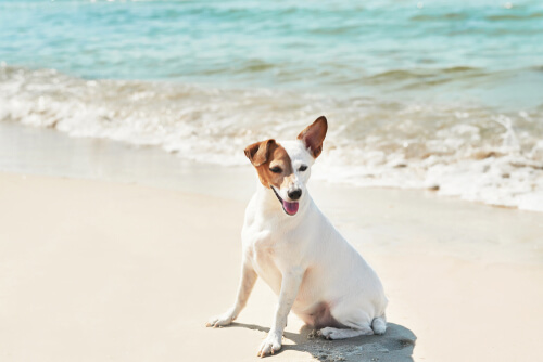 Obligaciones legales del dueño de una mascota en la playa
