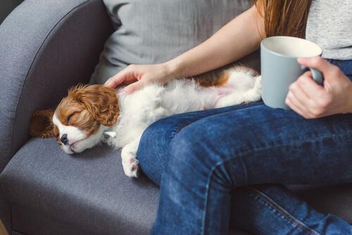 Mujer acaricia a su perro dormido