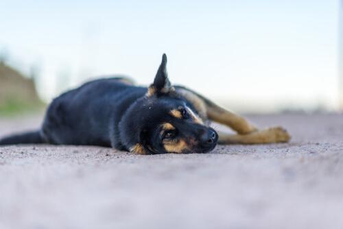 Perro cansado yace en el suelo