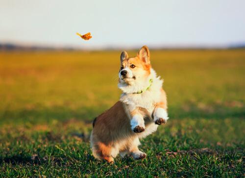 Perro corre tras una mariposa