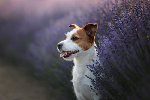 3 hierbas medicinales que ayudan a la mejora de la salud en mascotas